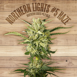 Seed The Plant - Generación F2 - Northern Lights #5 Haze