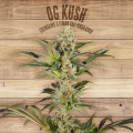 Seed The Plant - Generación F2 - OG Kush