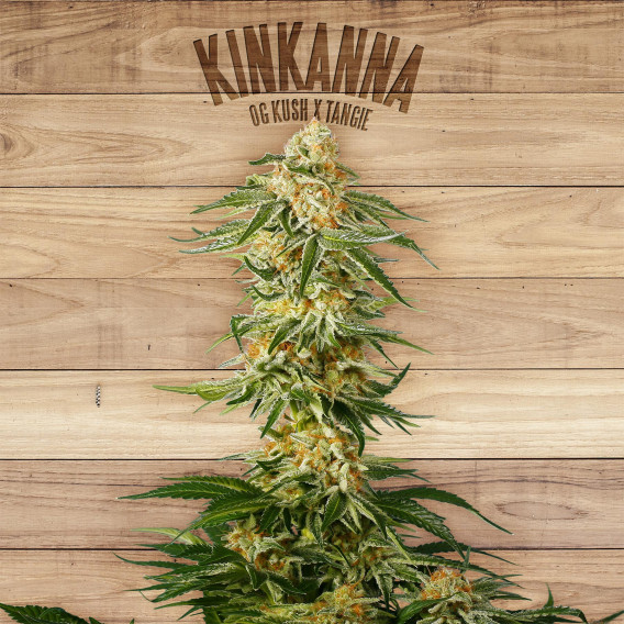 Seed The Plant - Generación F3 - Kinkanna