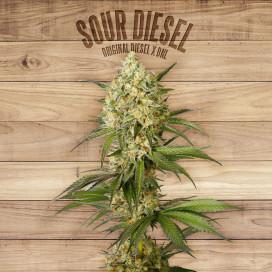Seed The Plant - Generación S4 - Sour Diesel