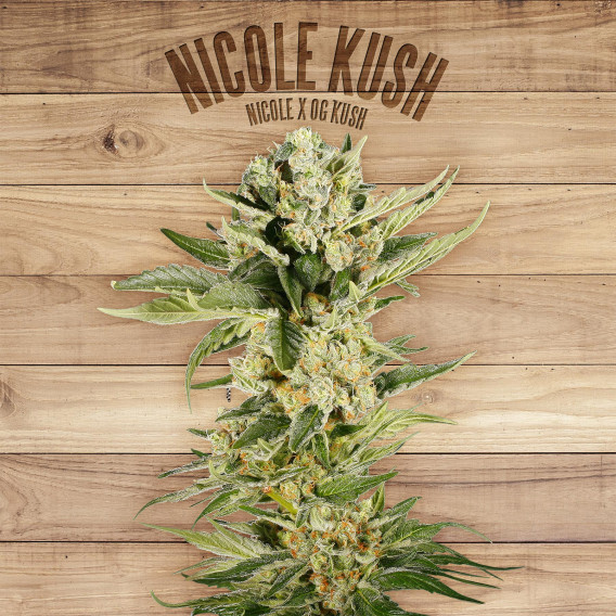 Seed The Plant - Semilla generación S6 - Nicole Kush
