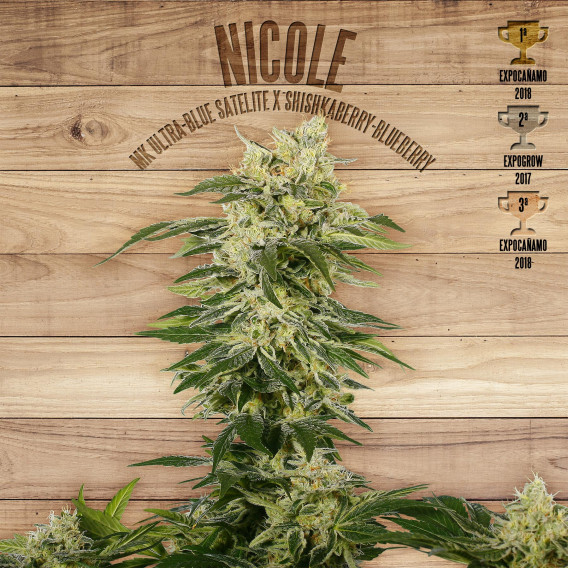 The Plant Organic Seeds 5-1 Nicole Indica Feminizada Flor