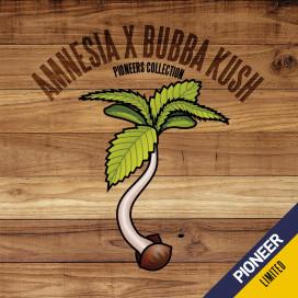 Amnesia x Bubba Kush