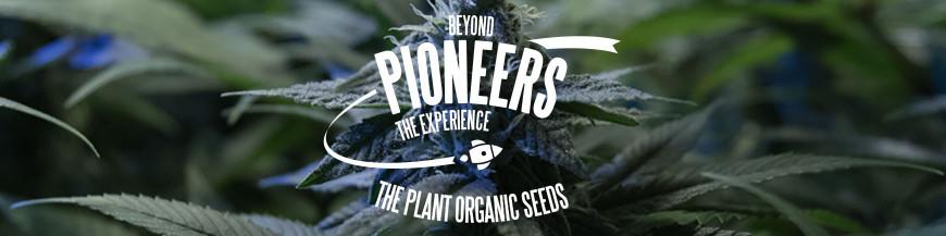 Semillas de Marihuana Pioneers