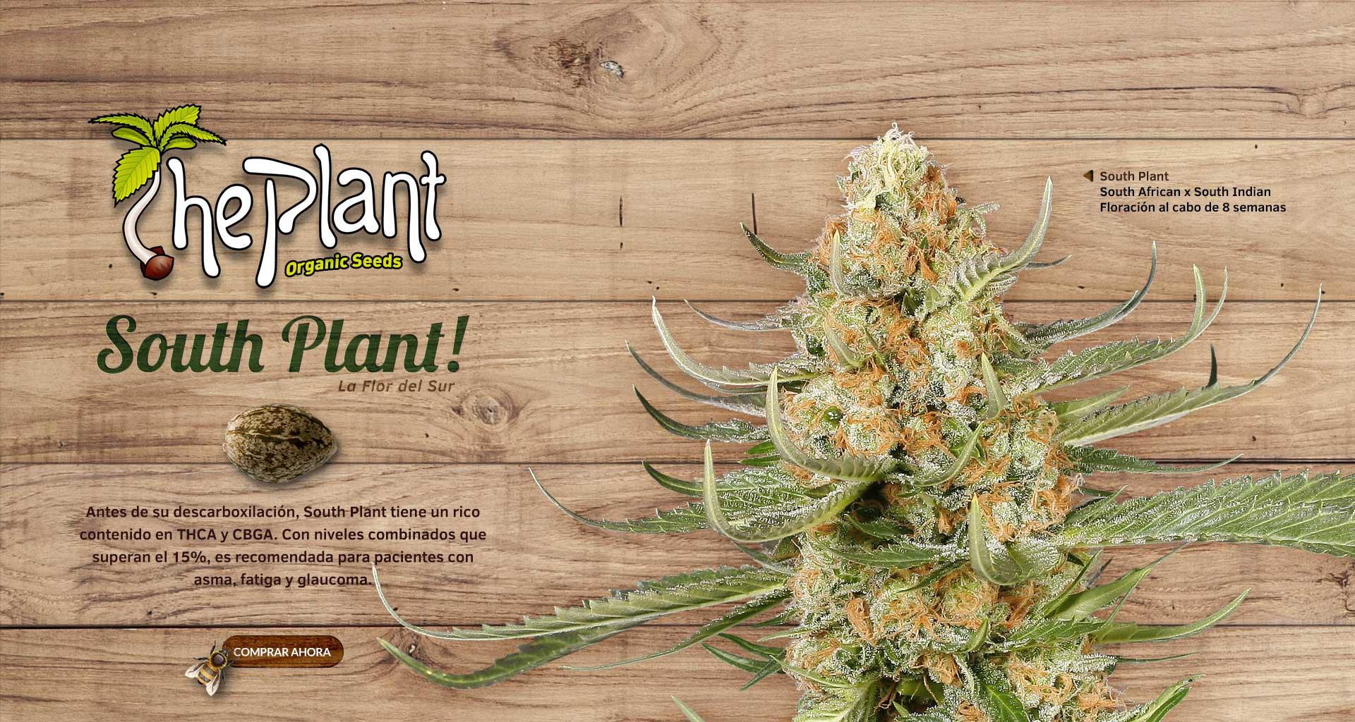 South Plant